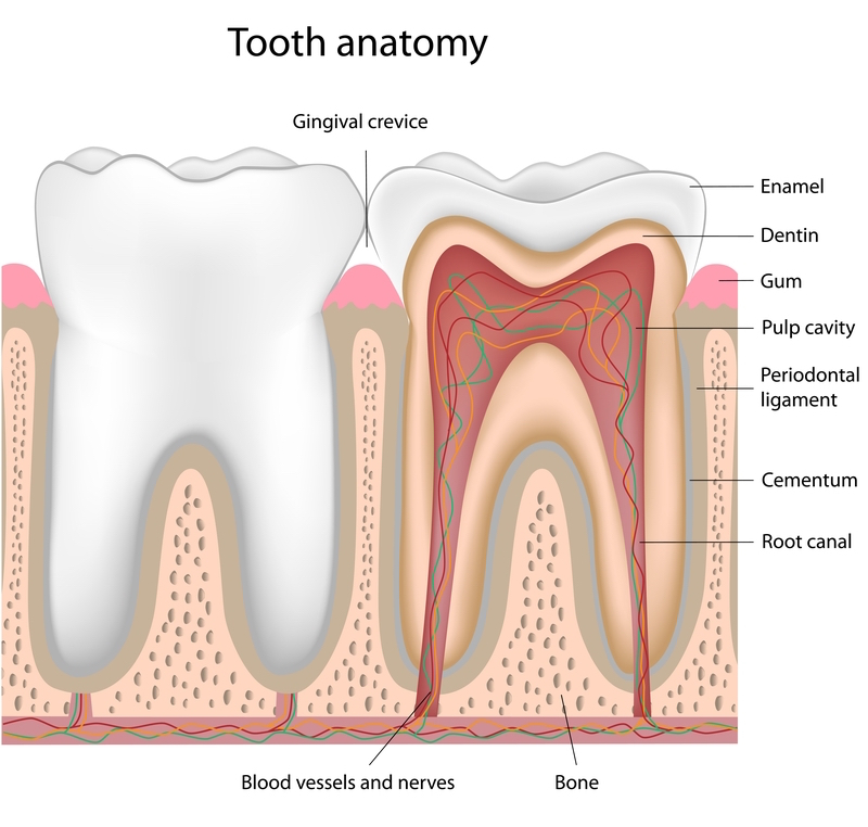 Root Canal Treatment Thailand